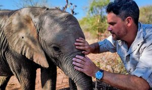 Walking with Elephants Review 2020 Tv Show